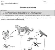 BrainBuilder Example Iteration 2
